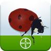 Normal_nuttige_insecten