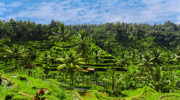 Indonesie Ubud