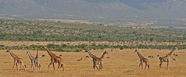 Zuid Afrika Krugerpark