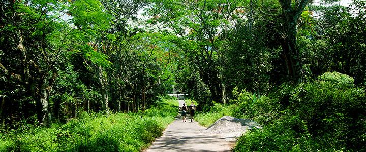 Cuc Phuong National park