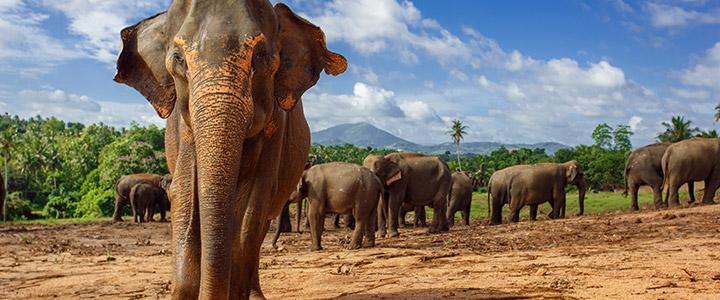 Natuurpark Sri Lanka