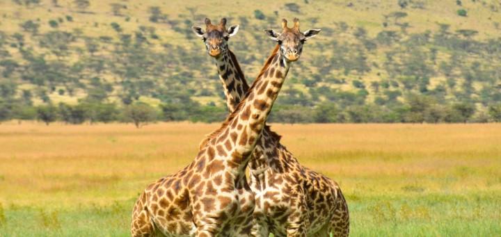 Sawadee Rondreis Tanzania - Serengeti