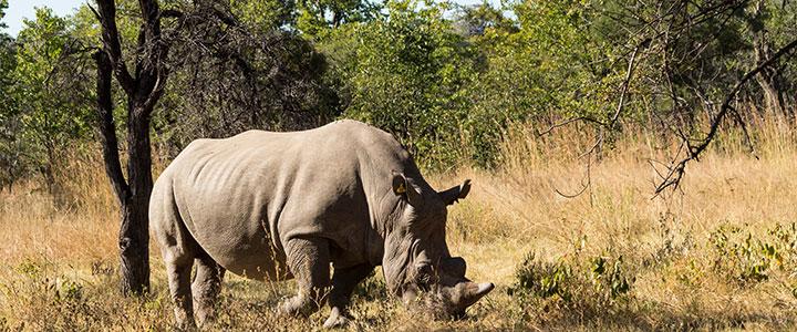 Matobo nationaal park