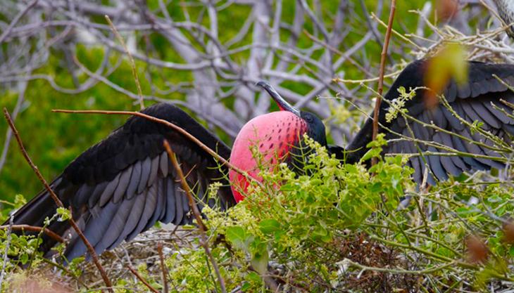 Vogel in Ecuador
