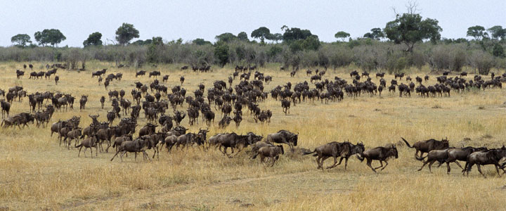 Masai Mara reservaat