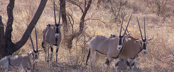 Samburu reservaat