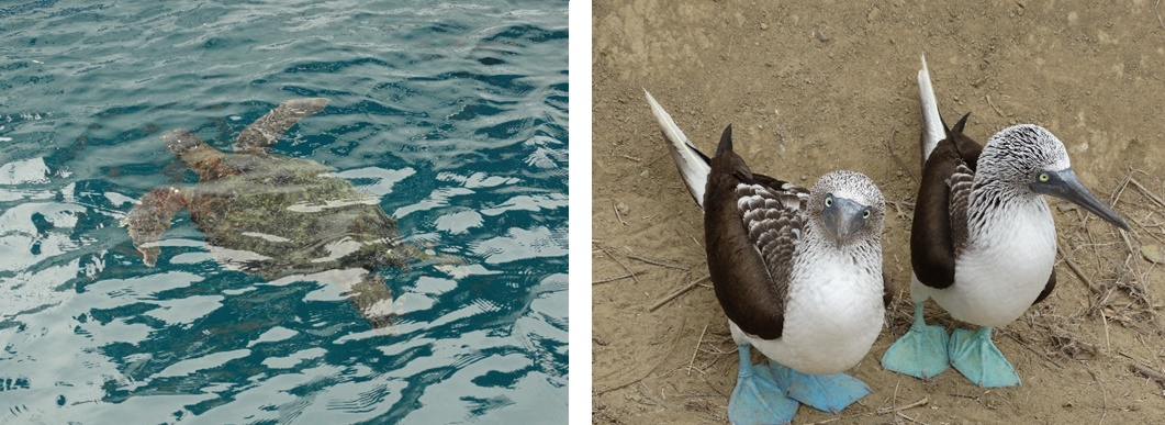 Dieren op de Galapagos-eilanden