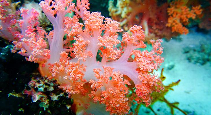 Blijf af van koraal