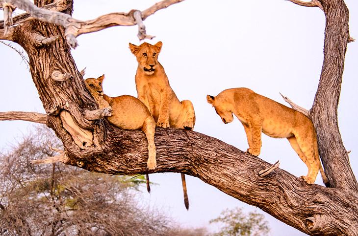 Tanzania - Selous National Park