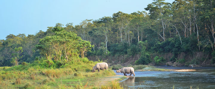 Nationaal park Chitwan
