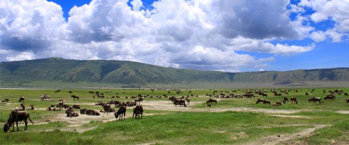 Ngorongoro-gebied