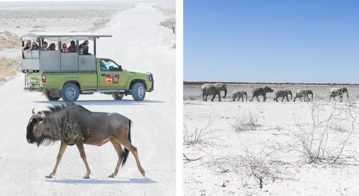 Etosha National Park, Namibië