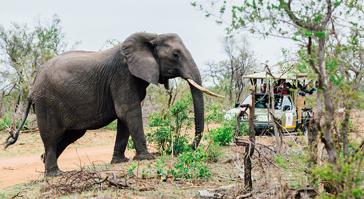 olifant in nationaal park in afrika