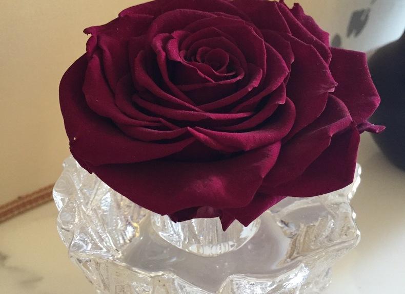 Preserved roses dark
