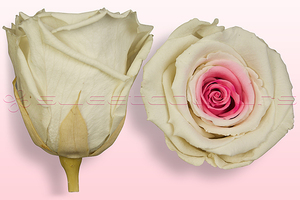 Product box rose amor  preserved roses  white pink