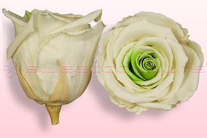 Product box rose amor  preserved roses  white green