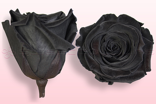 Geconserveerde rozen Zwart