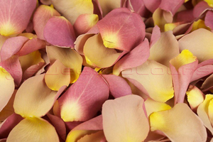 Product box freeze dried rose petals  stunning pink