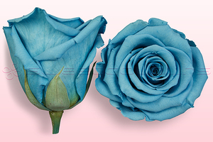Product box rose amor  preserved roses  light blue