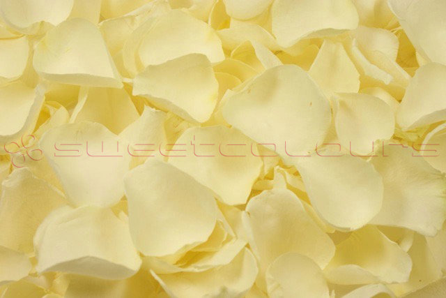 Freeze dried rose petals Off white