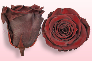 Product box rose amor  preserved roses  dark brown