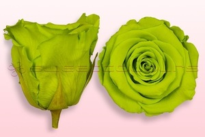 Product box rose amor  preserved roses  light green