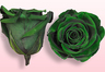 Preserved roses Dark green