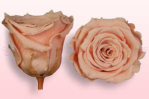 Product box rose amor  preserved roses  peach