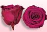Rose stabilizzate Cerise