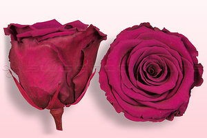 Product box rose amor  preserved roses  cerise pink