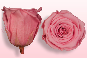 Product box rose amor  preserved roses  light pink