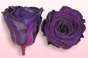Product box rose amor  preserved roses  purple