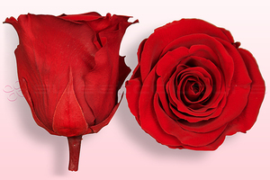 Product box rose amor  preserved roses  red