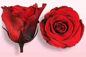 Product box rose amor  preserved roses  red black