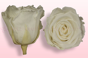Product box rose amor  preserved roses  white