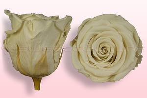 Product box rose amor  preserved roses  off white