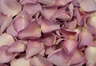 Freeze Dried Rose Petals Lovely Lilac