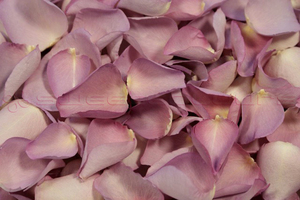 Product box freeze dried rose petals lovely lilac