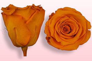 Product box rose amor  preserved roses  dark yellow