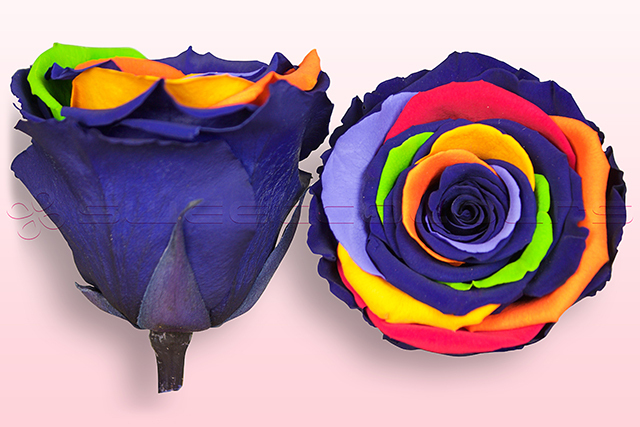 Preserved roses Rainbow
