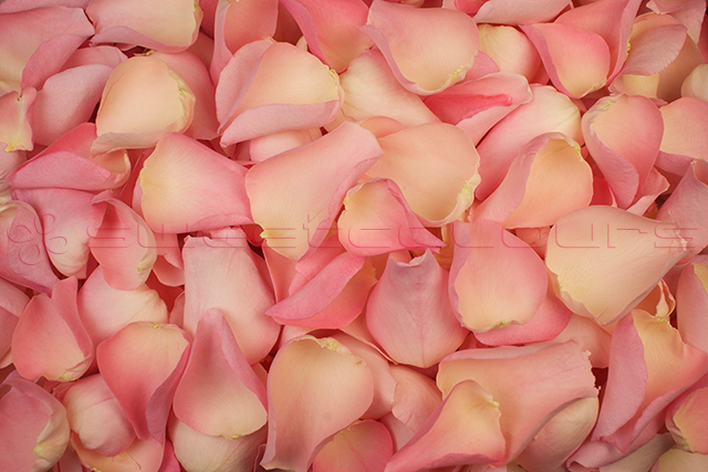 Freeze dried rose petals Soft pink