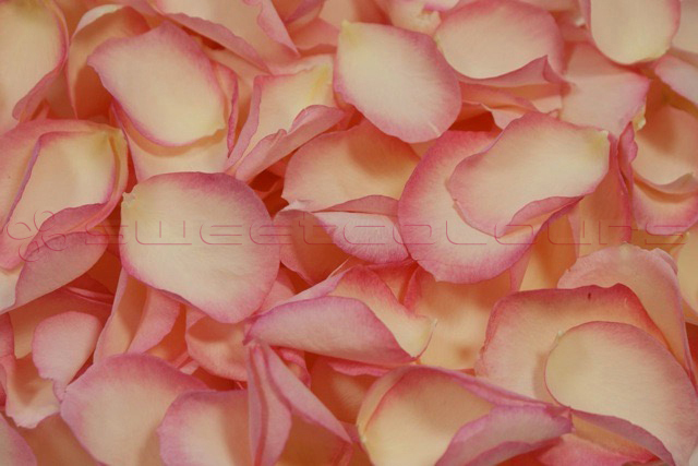 Freeze Dried Rose Petals Vintage Pink