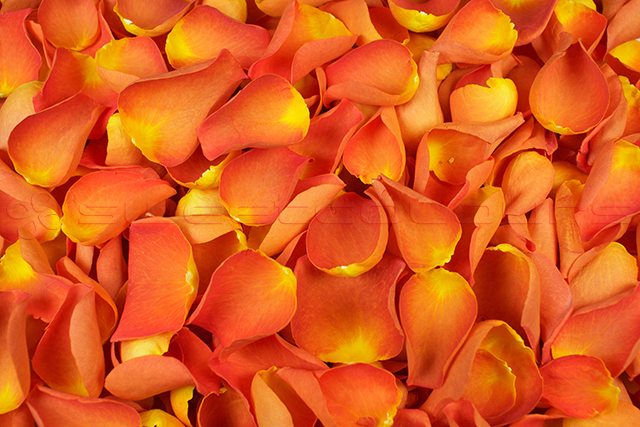 Gefriergetrocknete Rosenblätter Dunkelorange