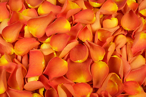 Product box freeze dried rose petals  orange