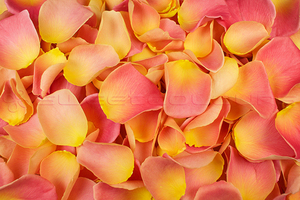 Product box freeze dried rose petals  peach and pink