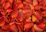 Freeze dried rose petals Copper