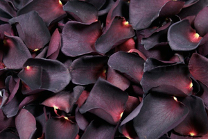 Product box freeze dried rose petals  aubergine
