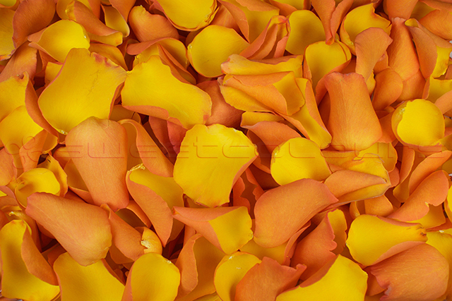 Freeze dried rose petals Golden yellow