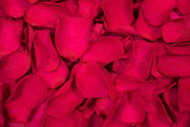 Pétales de roses conservés Cerise foncé