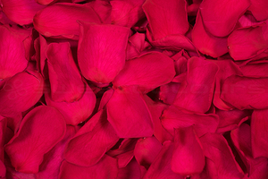 Product box preserved rose petals  cranberry